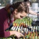 Student observing seedlings in greenhouse
